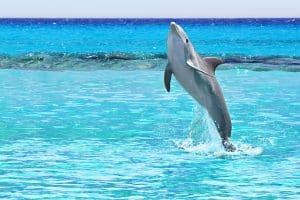 Krystal International Vacation Club shares top attractions in Cancun this Winter (7)