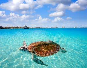 Krystal International Vacation Club A Mexican Holiday 2